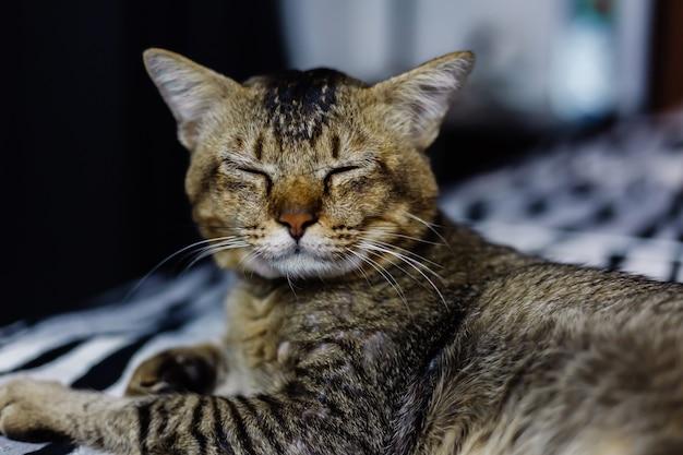 Fermer le portrait de beau chat dépouillé reposant sur une couverture zébrée