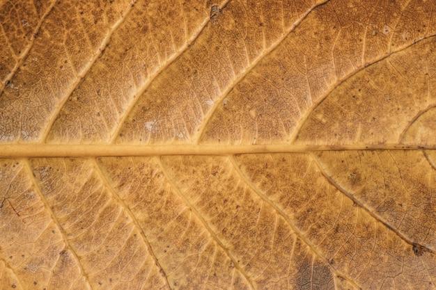 Fermer la texture de la feuille jaune. fond de feuille.