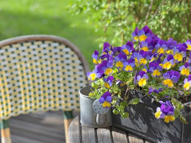 Fermez l'alto pourpre dans un pot de fleurs sur une table de jardin avec un petit arrosoir