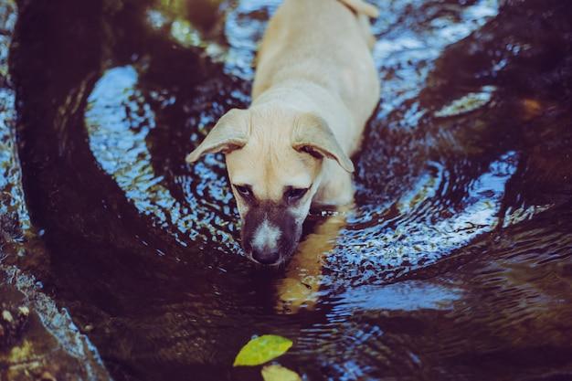 Fermez un chien errant chiot. chien errant sans abri abandonné est couché dans la fondation.