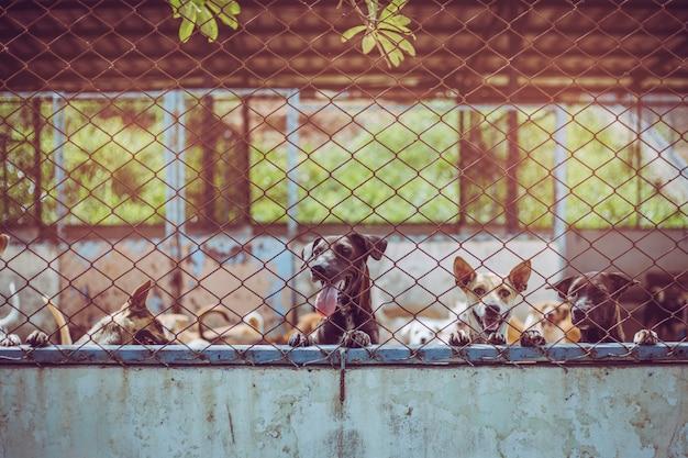 Fermez les chiens errants. des chiens errants sans abri abandonnés sont couchés dans les fondations.