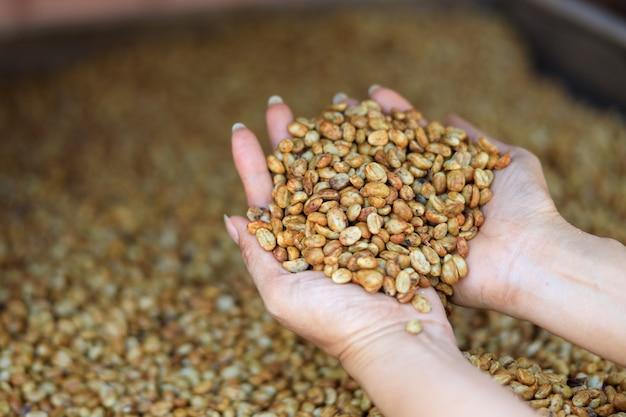 Fermez la main de l'agriculteur tenant les grains de café crus pour le séchage
