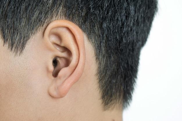 Fermez les oreilles avec un fond blanc.