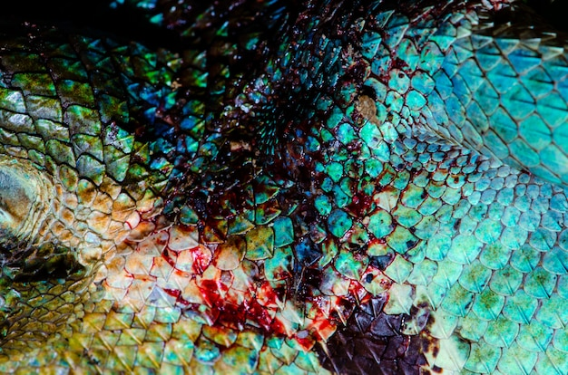 Fermez la peau de vrai caméléon, la texture de peau de blessure de caméléon pour votre conception.