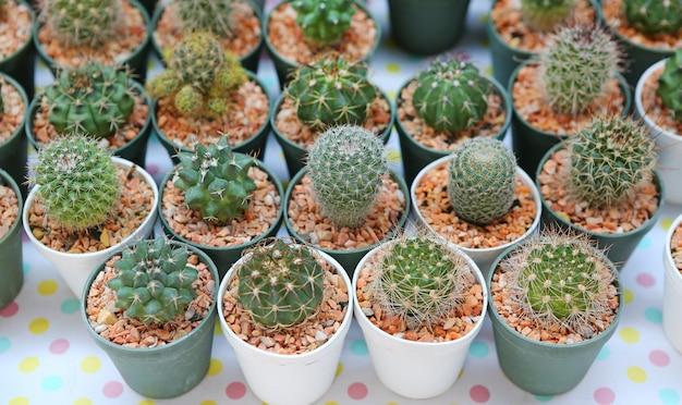Fermez petit cactus dans le petit pot dans le magasin de jardin