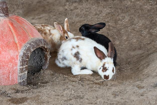 Fermez trois lapins.