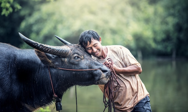 Fermier asiatique et buffle dans une ferme