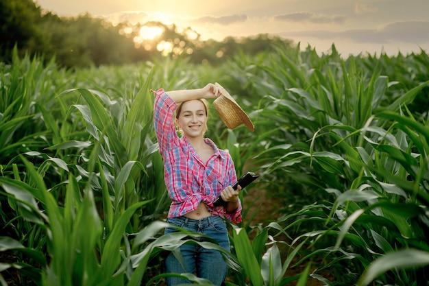Fermier caucasien marchant dans un champ de maïs et examinant la récolte avant la récolte au coucher du soleil. agriculture - production alimentaire, concept de récolte