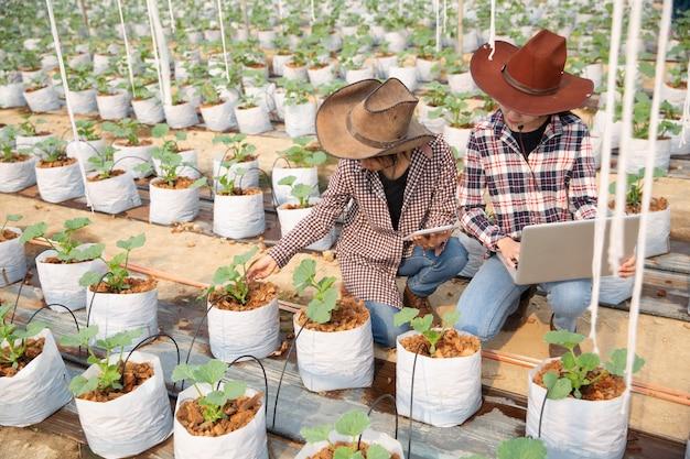 Fermier contrôlant le melon sur l'arbre. notions de vie durable, travail en plein air, contact avec la nature, alimentation saine.