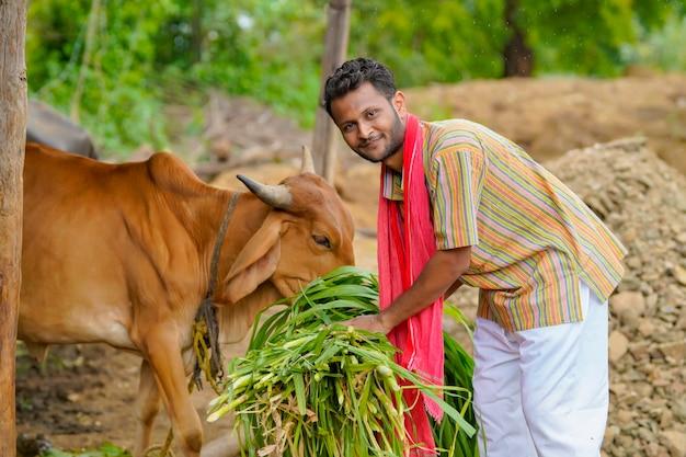 Fermier donnant de la nourriture au bétail dans sa ferme