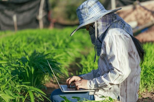 Un fermier thaïlandais utilise un ordinateur portable dans une ferme de légumes de gloire du matin