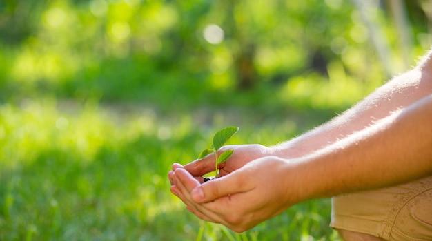 Le fermier tient le sol avec une jeune pousse dans ses paumes