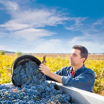 Fermier vigneron méditerranéen récolte cabernet sauvignon