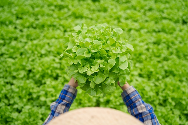 Fermière asiatique portant chapeau travaillant dans la serre hydroponique tenant une salade de légumes de chênes verts pour en vérifier la qualité.