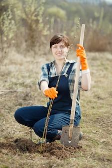 La fermière plantant des pousses