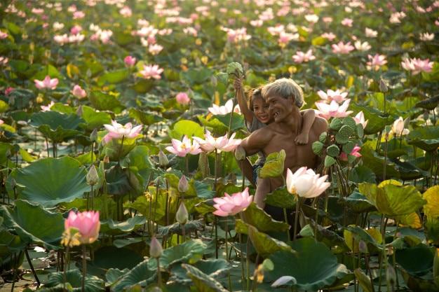 Des fermiers asiatiques de famille rassemblent des fleurs de lotus et portent leurs filles.