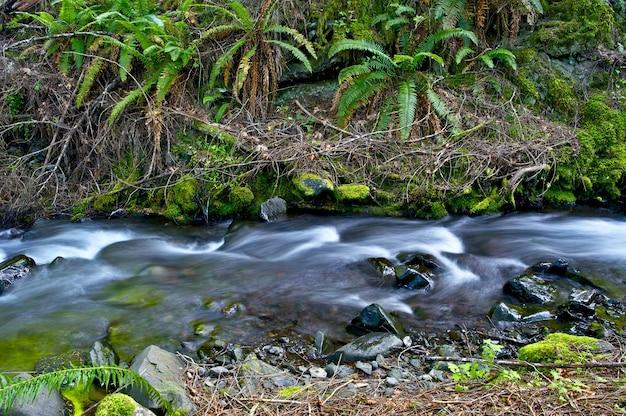 Ferns creek