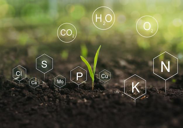 Fertilisation et rôle des nutriments dans la vie végétale. sol avec icône numérique de nutriments minéraux.