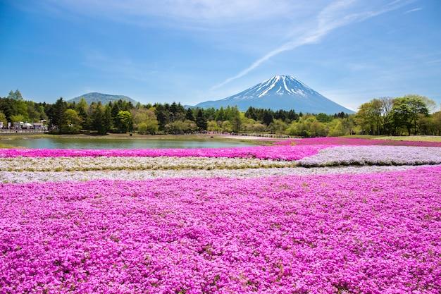 Festival du japon shibazakura avec le champ de mousse rose de sakura ou de fleur de cerisier mountain fuji