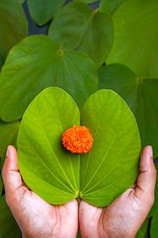 Festival indien dussehra, feuille d'apta verte en main