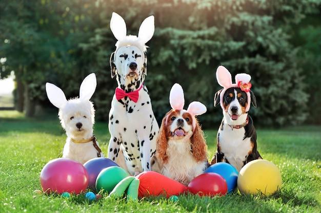 Fête de pâques pour chien sur la pelouse du printemps