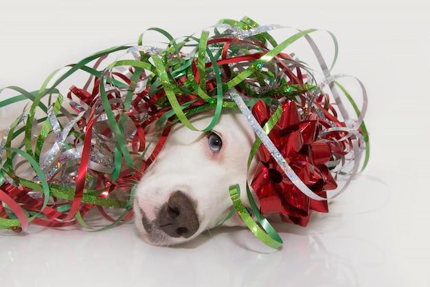 Fête présente à un chien avec des ruisseaux colorés de serpentine à l'occasion d'un anniversaire, du nouvel an, de noël, du carnaval ou d'un anniversaire
