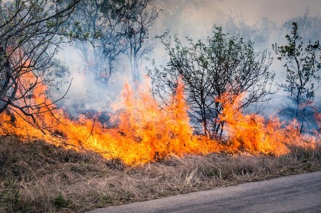 Feu de brousse brûlant au parc kruger en afrique du sud