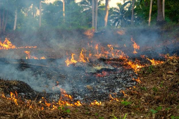 Feu de brousse dans la forêt tropicale de l'île de koh phangan, thaïlande