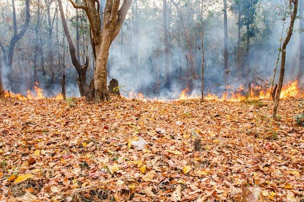 Feu de brousse dans la forêt tropicale