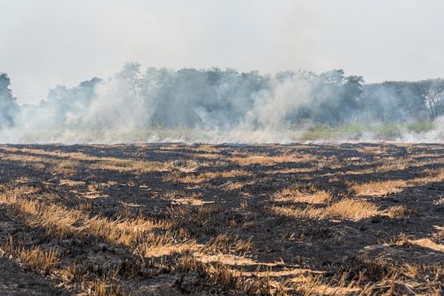 Feu brûlant de l'herbe sèche il danger pour l'environnement