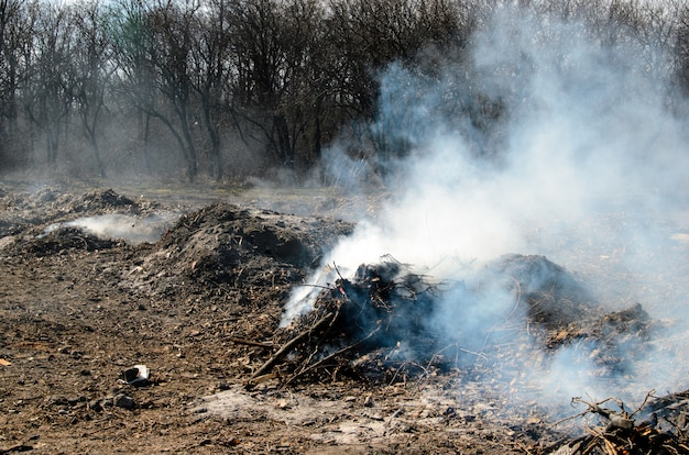 Le feu dans la forêt. poubelle.