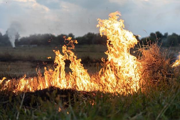 Feu dans la steppe, l'herbe brûle détruisant tout sur son passage.