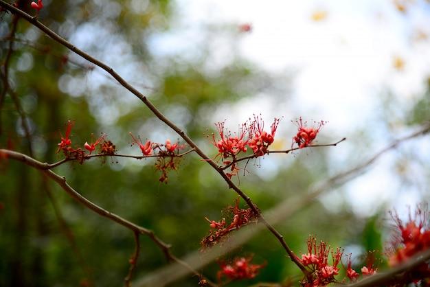 Feu de fleurs du pakistan