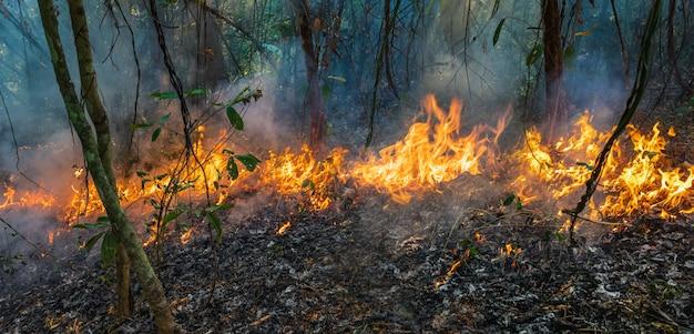 Le feu de forêt brûle principalement comme un feu de surface, se propageant le long du sol