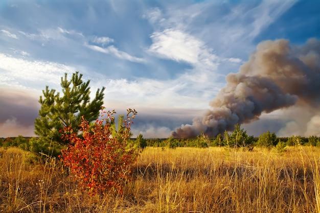 Feu de forêt catastrophe naturelle forêt en feu