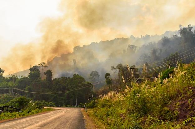 Feu de forêt en été au laos