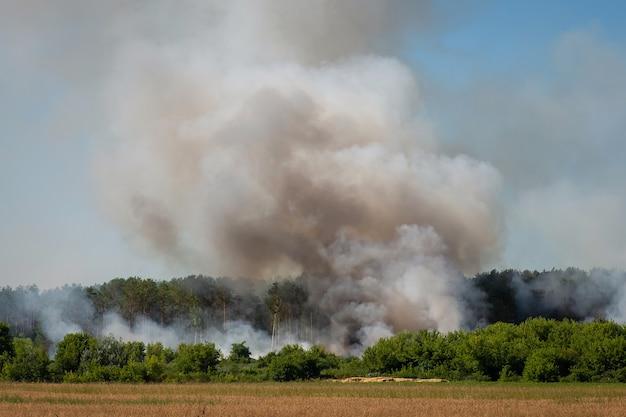 Feu de forêt. la fumée grise s'échappe de la forêt de pins.