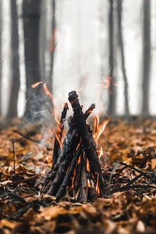 Feu de joie dans la forêt le soir