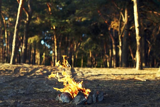Un feu de joie dans une pinède.
