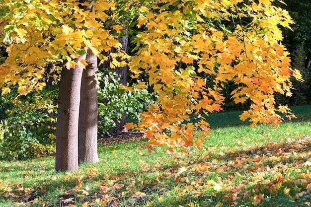 Feuillage d'arbre doré dans le parc de la ville d'automne