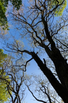 Le feuillage des arbres est illuminé par la lumière du soleil, des arbres au feuillage vert en été
