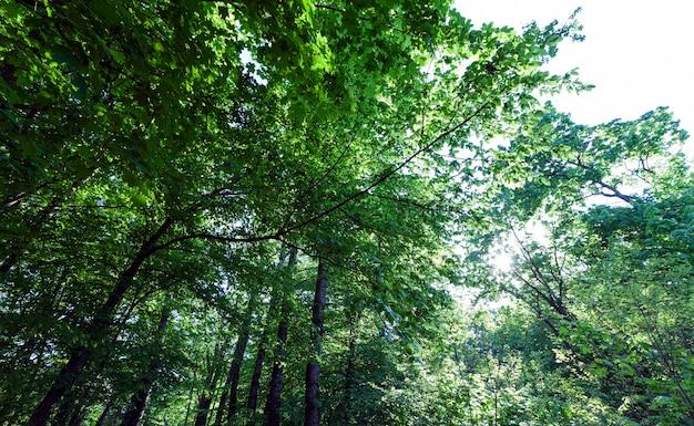 Le feuillage des arbres est illuminé par la lumière du soleil