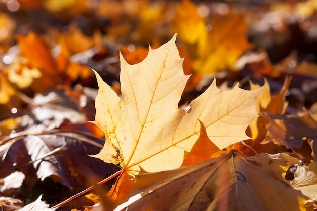 Feuillage d'arbres à feuilles caduques éclairé par la lumière du soleil, le territoire du parc d'automne par temps chaud et ensoleillé