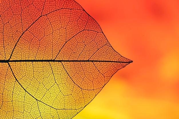 Feuillage automnal abstrait de couleur orange