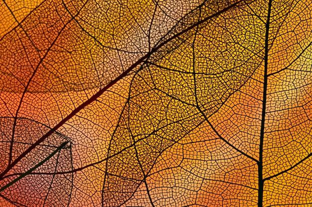 Feuillage d'automne abstrait orange