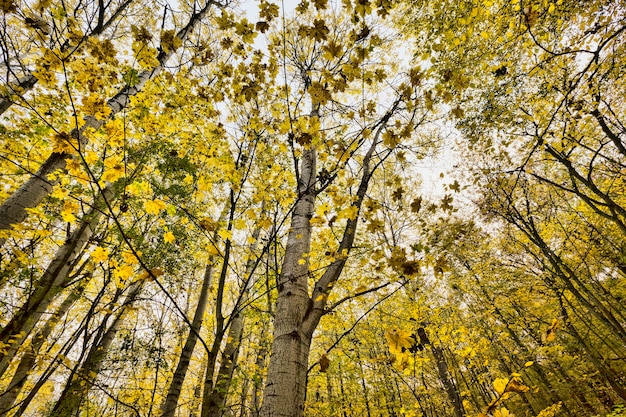 Feuillage d'automne jaune
