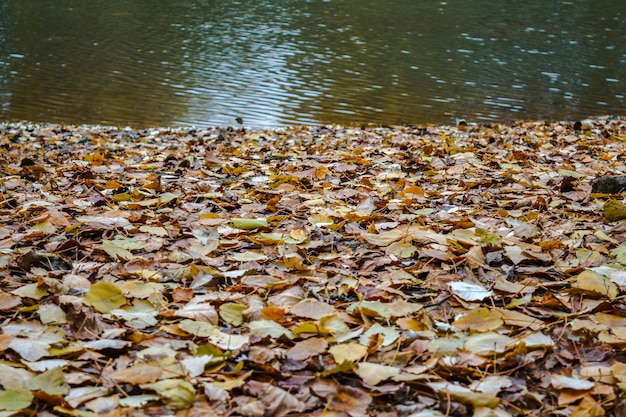 Feuillage d'automne sur la rive d'une rivière avec des ondulations