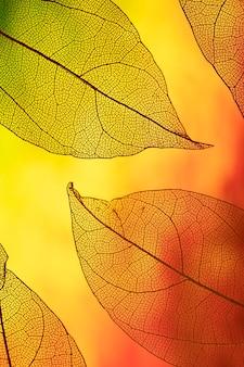 Feuillage d'automne transparent de couleur vive