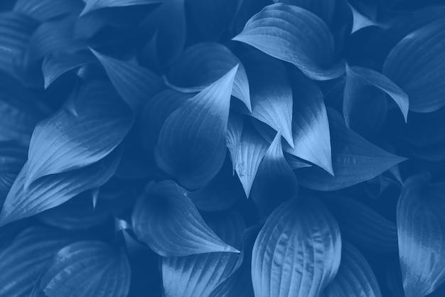 Feuillage bleu frais. feuilles de fond. toile de fond dynamique verte. couleur bleue et calme tendance. texture des feuilles tropicales en couleur monochrome.