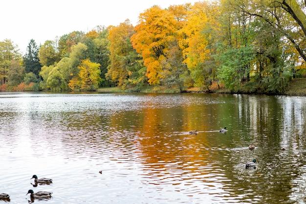 Feuillage coloré d'automne sur le lac avec des canards et de beaux bois